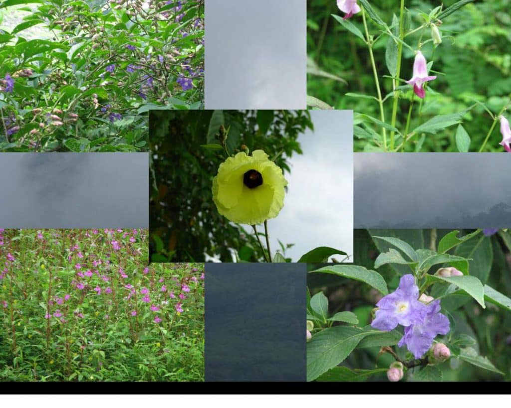 beautiful wild flowers at kalavantin durg 2
