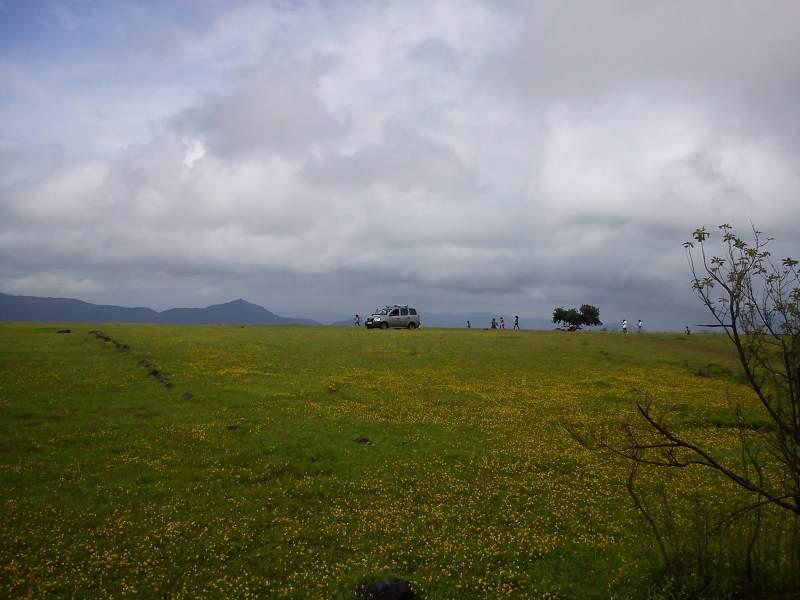 kaas plateau of flowers maharashtra