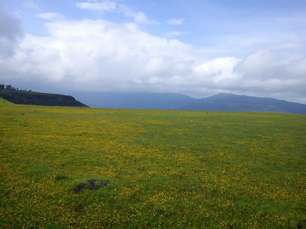 Kaas plateau (Kas pathar) Valley of Flowers Maharashtra [2018 updated]