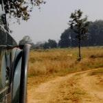 My first Jungle Safari – Kanha, MP