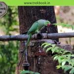 Bird watching at Ranthambore