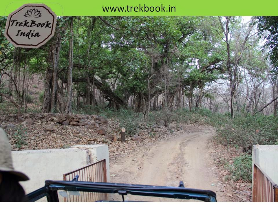Dense jungle, Ranthambore, India