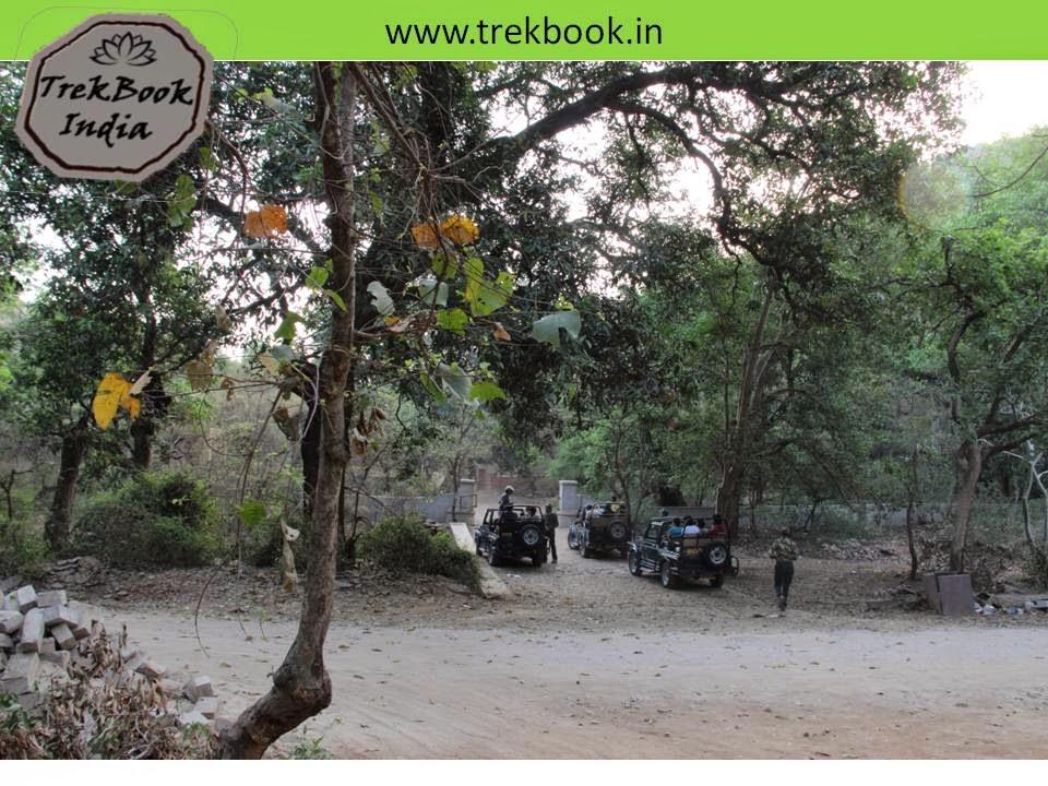 Ranthambore rajasthan india gate no 5