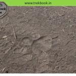 Tiger safari – Ranthambore