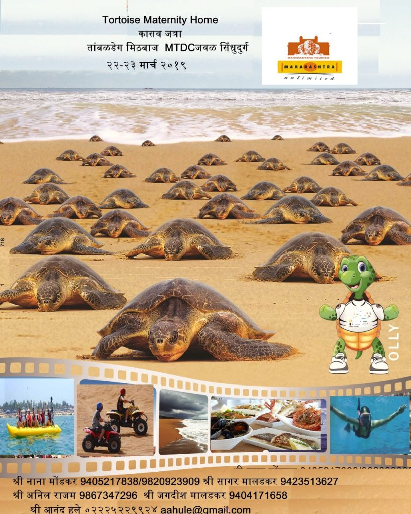 turtle festival 2019 dates
