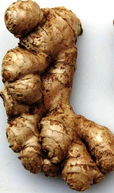 Fresh juicy Ginger