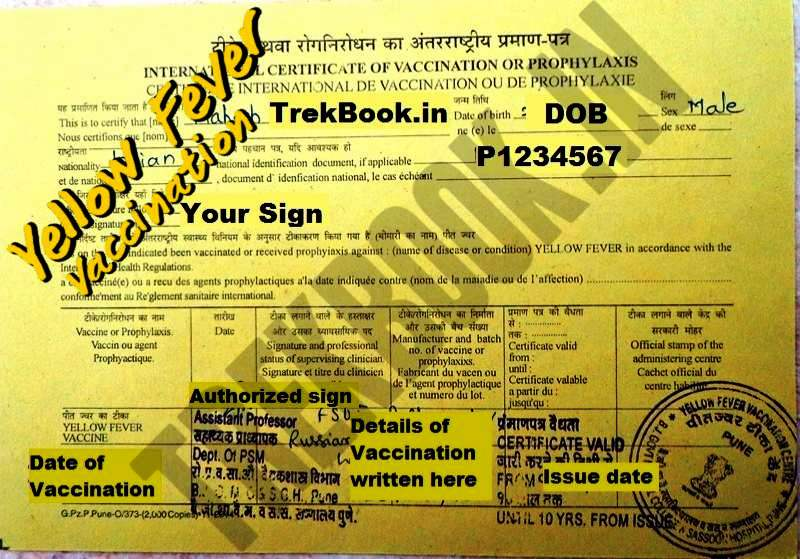 Yellow Fever Vaccination Pune 2018 Online Booking Available Now