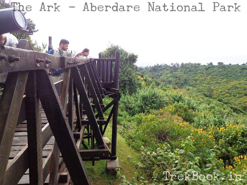 The Ark Bridge to look upon in jungle