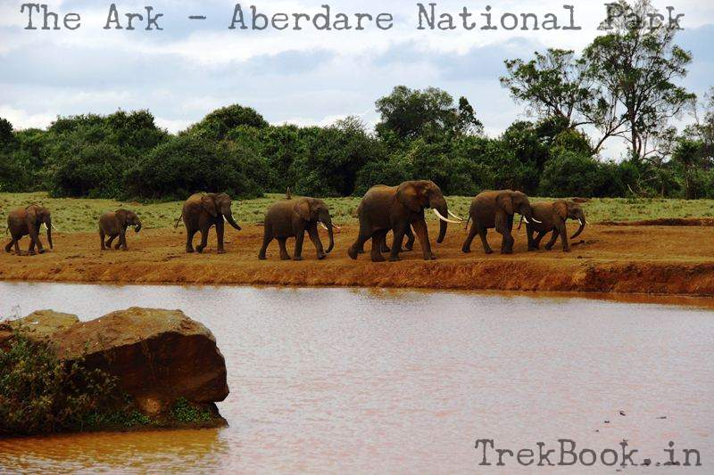 elephants coming for licking minerals