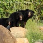 Daroji Sloth Bear Sanctuary Hampi