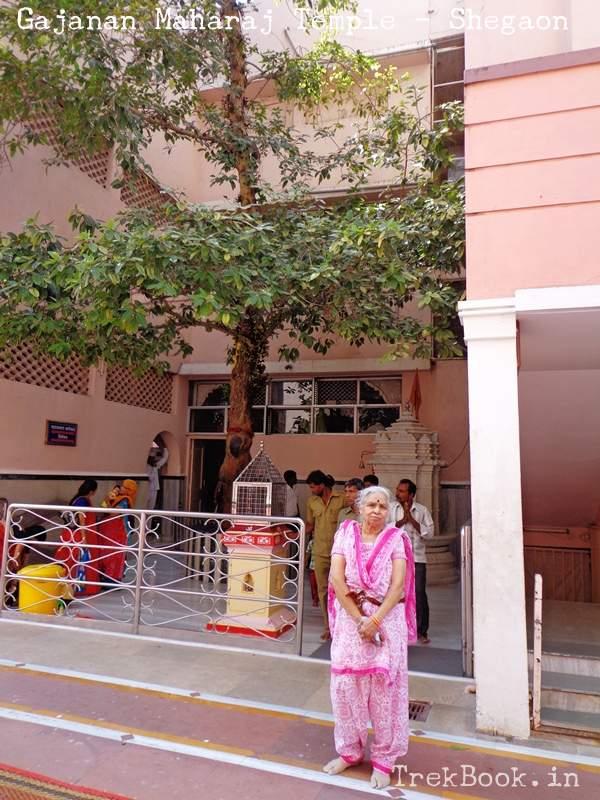 audumbar tree in shegaon temple
