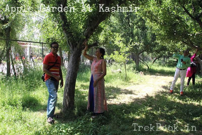 kashmir apple garden pahalgam
